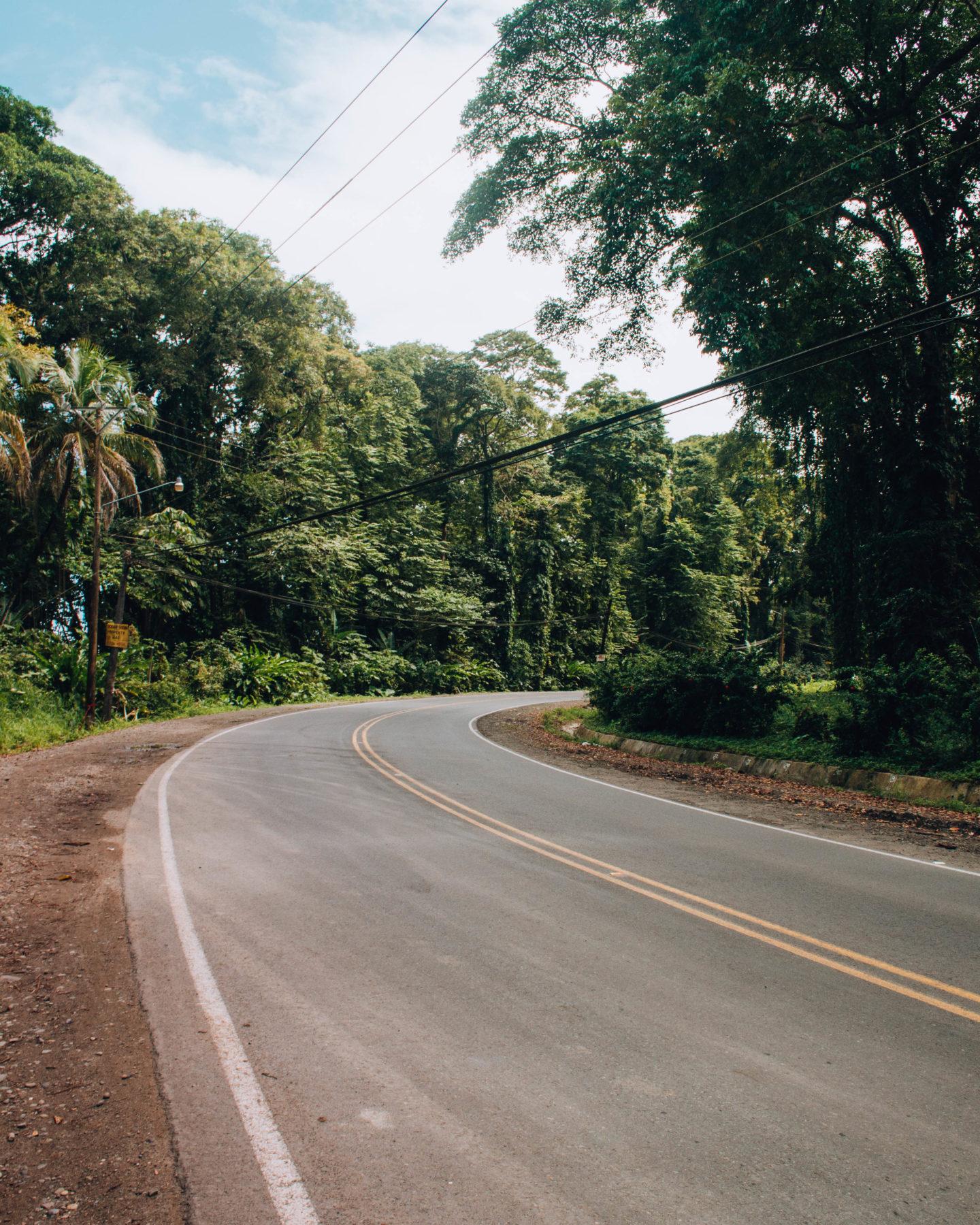 strada che attraversa foresta