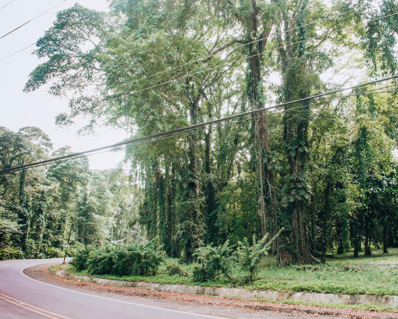 strada a ridosso della foresta pluviale