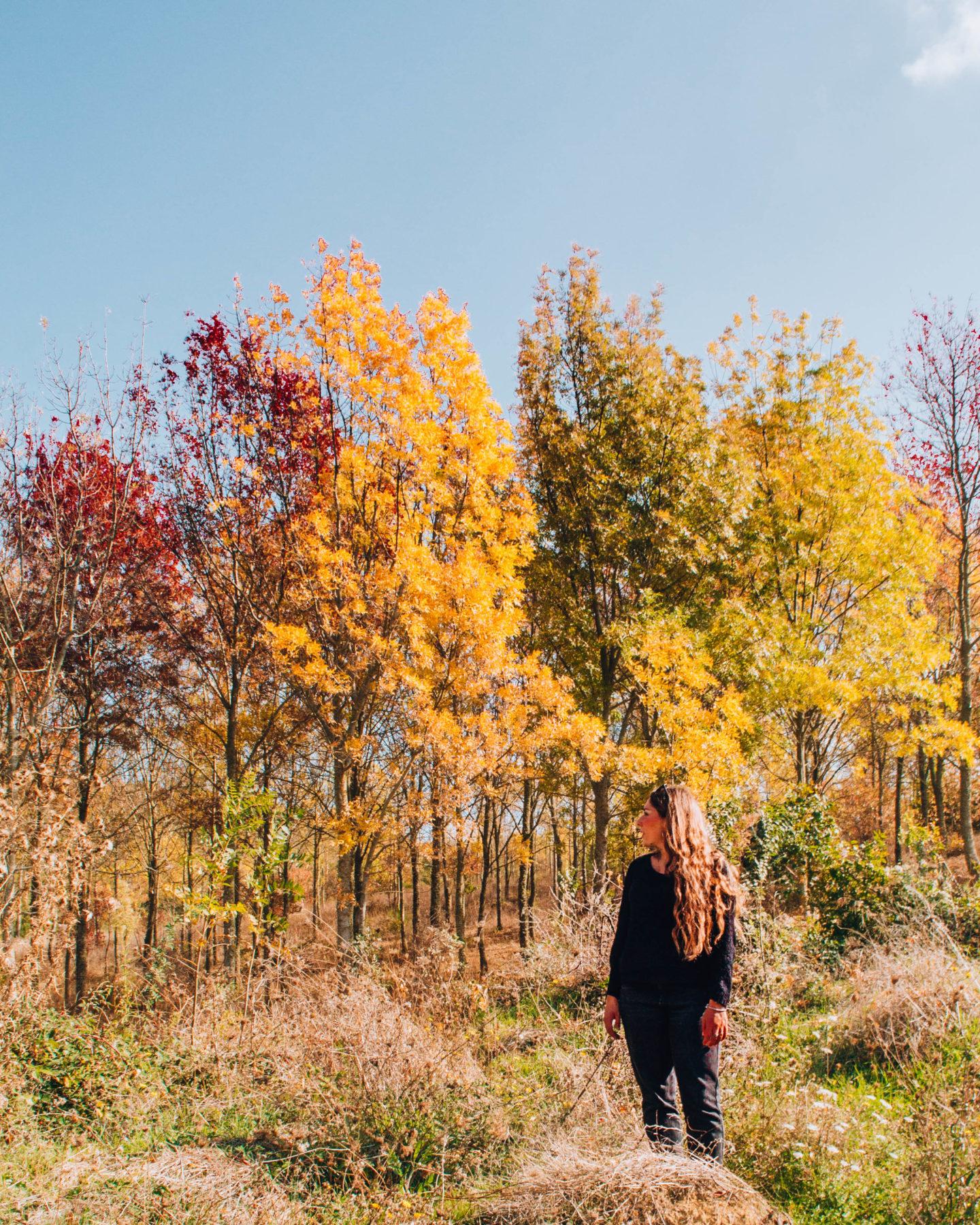 ragazza davanti a alberi colorati di rosso e arancione